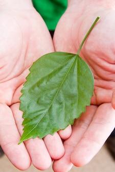 Zielony liść w dłoniach człowieka