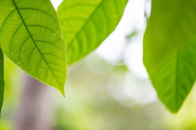 Zielony liść w lesie.