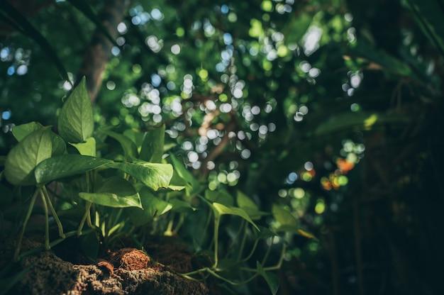 Zielony liść w ogrodzie, scena natury z zielonym liściem deski roślin w ogrodzie