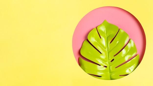 Zielony liść w ramce z miejsca kopiowania