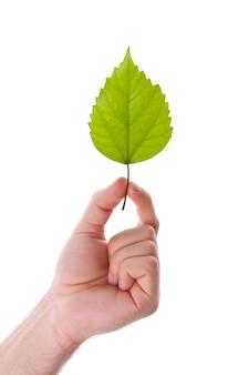 Zielony liść w ręku. na białym tle