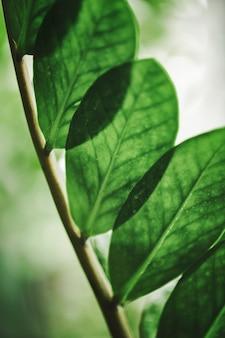 Zielony liść w zbliżeniu