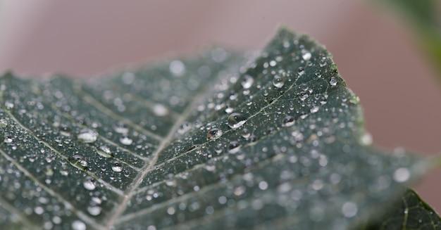 Zielony liść z bliska kroplami wody
