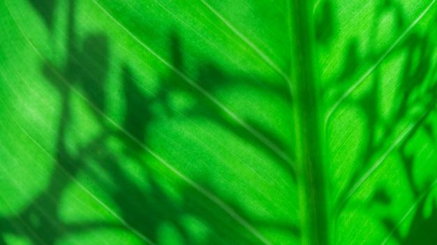 Zielony liść z cieniem liścia natura