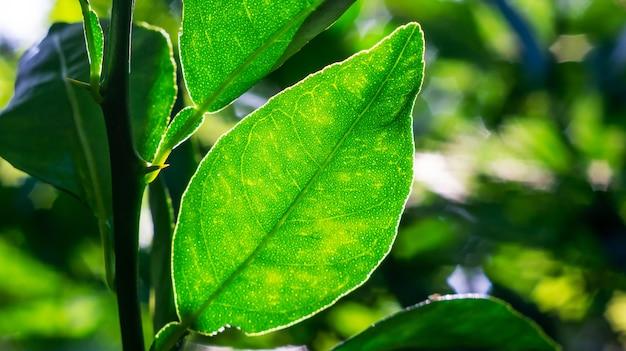 Zielony liść z cieniem niewyraźne