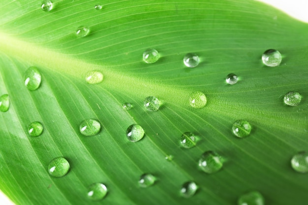 Zielony liść z kropelkami, zbliżenie