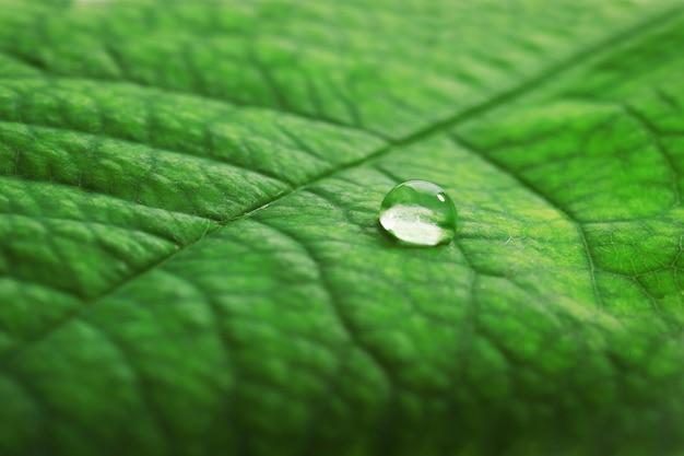 Zielony liść z kroplą, zbliżenie
