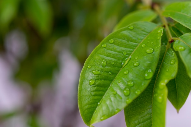 Zielony liść z kroplami deszczu i rozmytym tłem