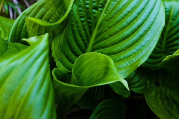 Zielony liść z kroplami wody dla