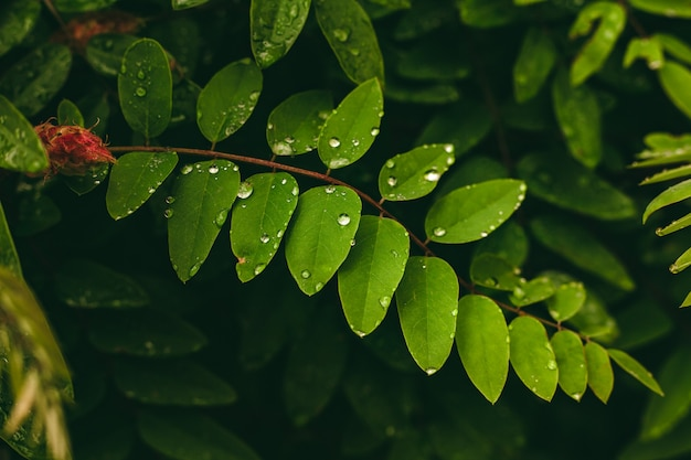 Zielony liść z kroplami wody duże piękne krople przezroczystej wody deszczowej na makro zielony liść krople rosy o poranku świecą w słońcu piękna tekstura liści w przyrodzie
