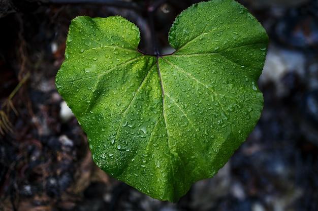 Zielony liść z kroplami wody. w lesie