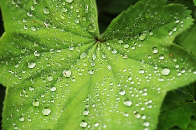 Zielony liść z kroplami wody