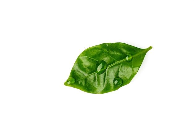 Zielony liść z kropli wody na białym tle.