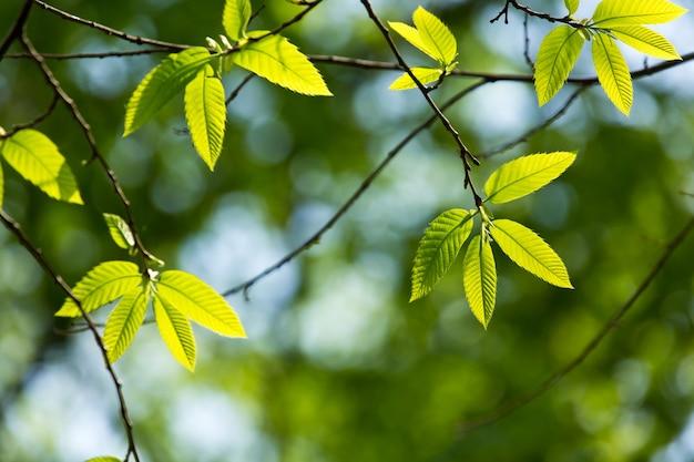 Zielony liść z kropli wody na czarnym tle