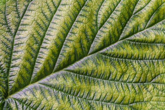 Zielony liść z teksturą