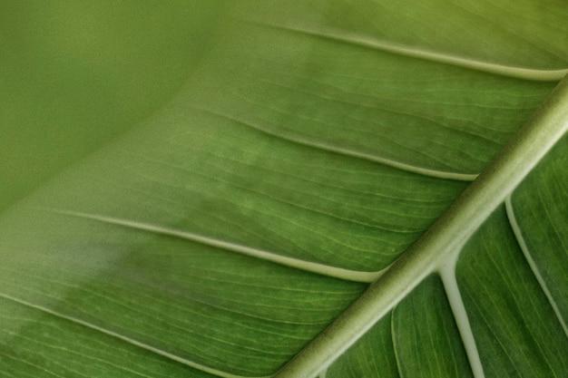 Zielony liść z żyłkami w makrofotografii