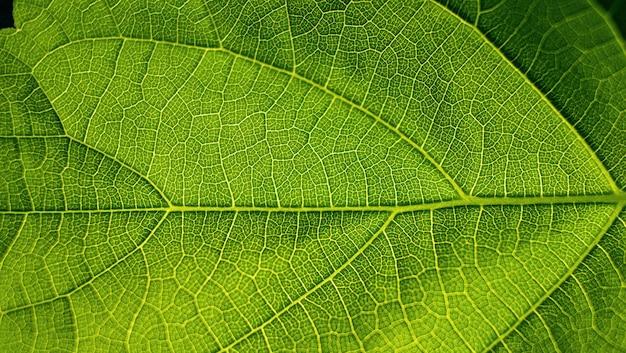 Zielony liść zbliżenie kwiat krtani