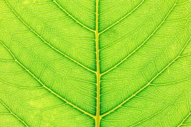 Zielony liścia wzoru tekstury tło