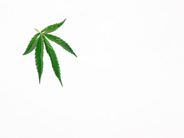 Zielony marihuana liść odizolowywający na bielu