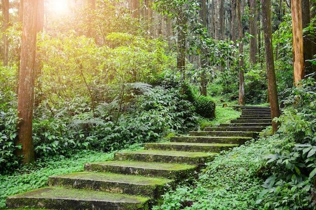 Zielony mech i porosty pokryte zakrzywionymi schodami w tropikalnej dżungli lub lesie sosnowym