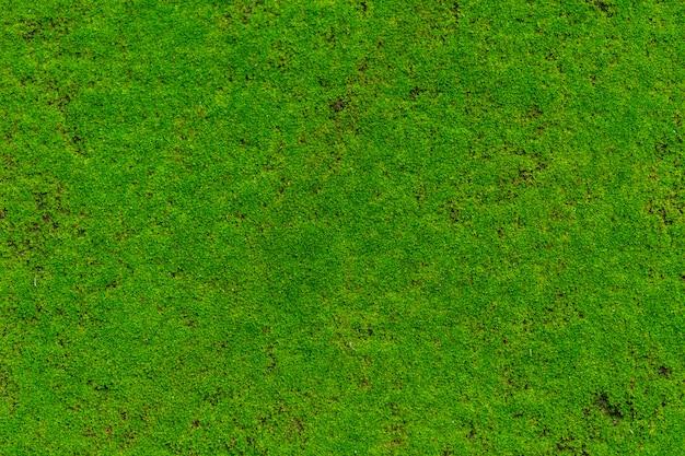 Zielony mech, mech pokrywa rośliny kamień mokry wilgotny w lesie deszczowym.