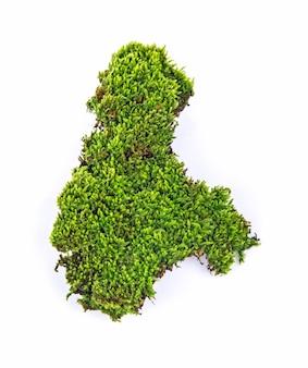 Zielony mech na białym tle