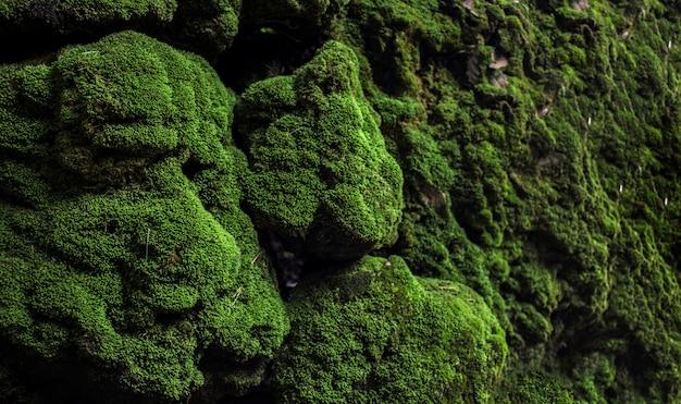 Zielony mech na kamieniu przy lasem tropikalnym