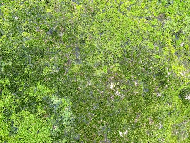 Zielony mech na kamiennej ścianie