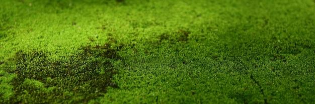 Zielony mech na tle tapety podłogi.