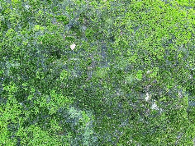 Zielony mech tekstury i tła
