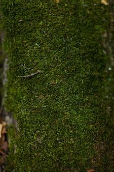 Zielony mech w lesie na kamieniach i drzewach