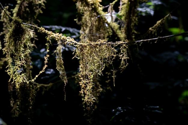 Zielony mech w lesie, porośnięty pniami