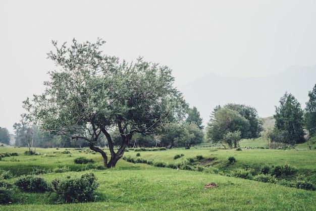 Zielony mglisty widok na góry na piękną wierzbę wśród wzgórz i zagajnik we mgle. vintage górski krajobraz z drzewami wśród roślinności we mgle. wierzba w górach. atmosferyczny mglisty krajobraz.