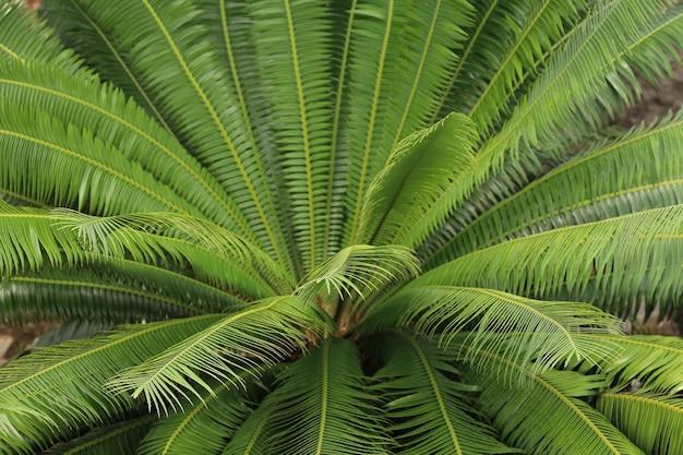 Zielony mini liść drzewa w ogrodzie