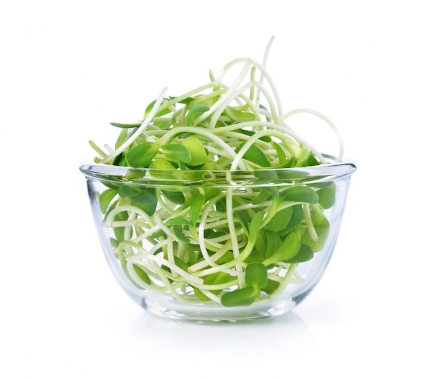 Zielony młody słonecznik w pucharze odizolowywającym na białym tle