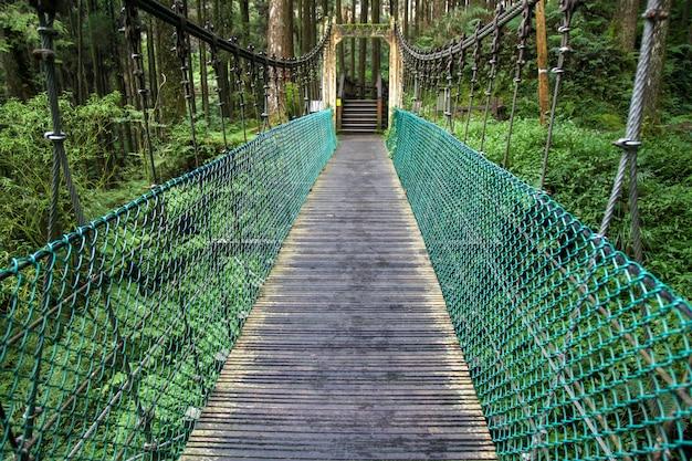 Zielony most w lasowym alishan przy taiwan