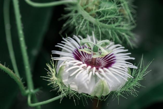 Zielony motyl z kwiatami