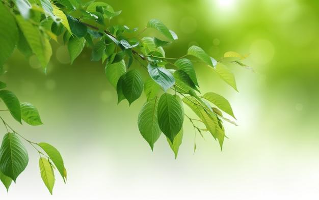 Zielony naturalny tło, zieleni tło