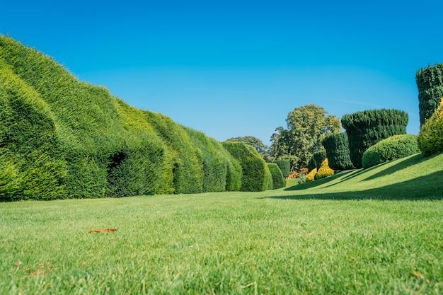 Zielony ogród z idealnie przyciętymi krzakami