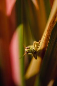 Zielony owad na brązowym patyku