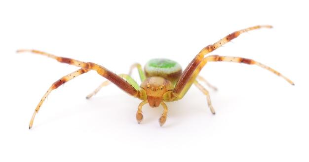 Zielony pająk na białym tle na białym tle.