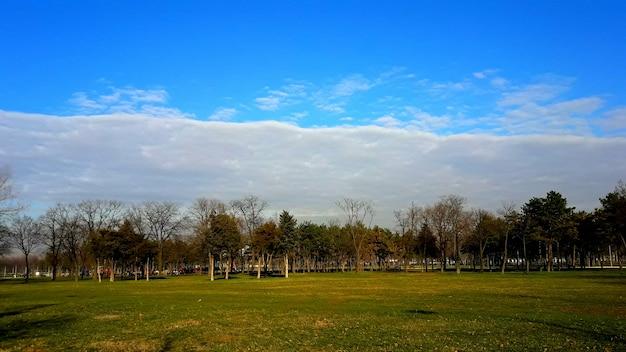 Zielony park krajobrazowy