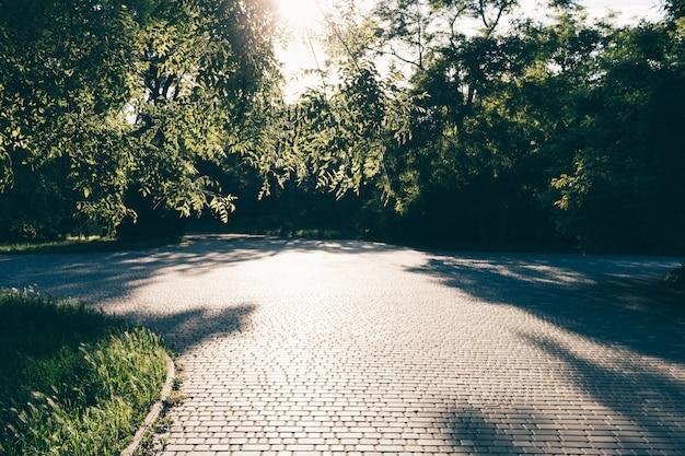 Zielony park lato ze ścieżkami spacerowymi