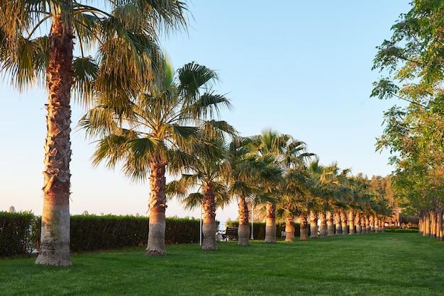 Zielony park palm i ich cienie na trawie.