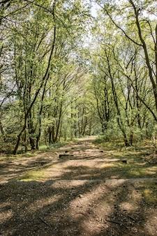 Zielony park z drzewami w słoneczny dzień