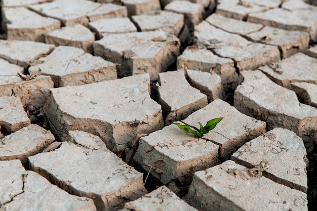 Zielony pęd wyrasta z suchej popękanej ziemi brak deszczu globalna klęska żywiołowa