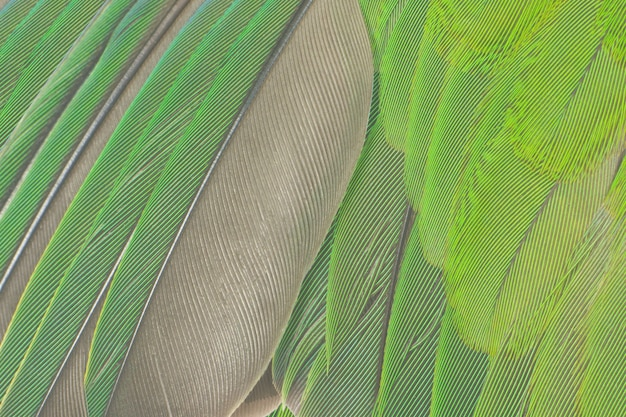 Zielony pióro tekstury tło
