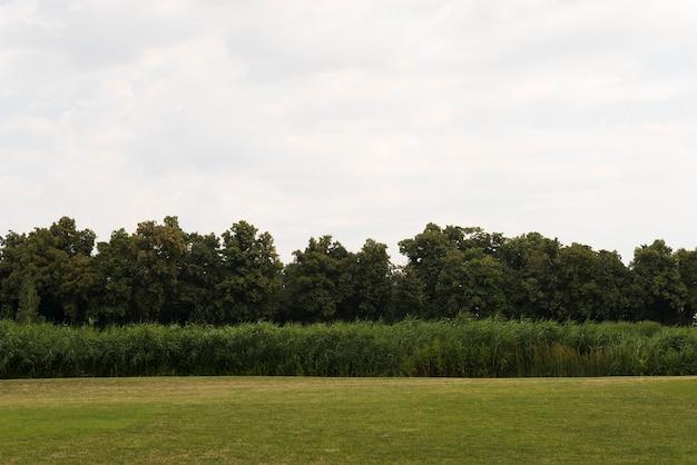 Zielony pole z młodym drzewnym lasem
