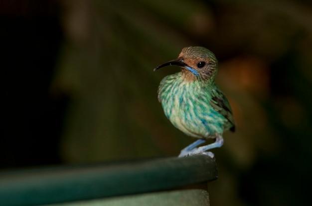 Zielony ptak w butterfly palace w branson, missouri