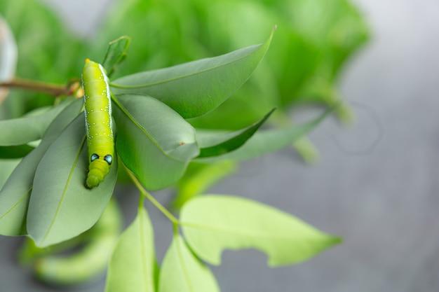 Zielony robak na świeżych liściach